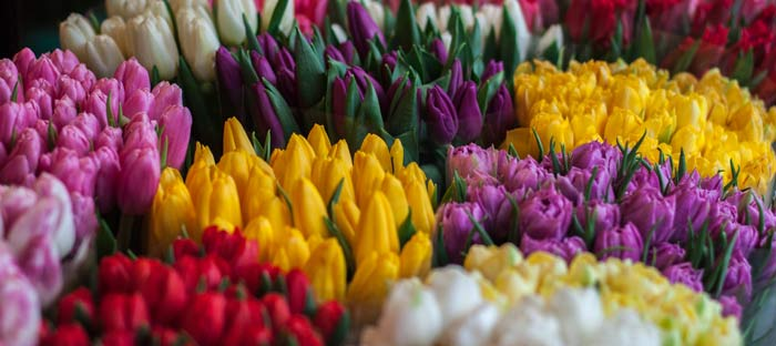 Spring is a wonderful time to enjoy shopping, dining, and the wonderful sights in Horsham, Montgomery County PA